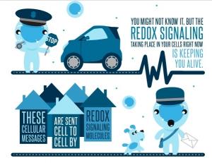 Redox-Sig-Tech-2-300x231
